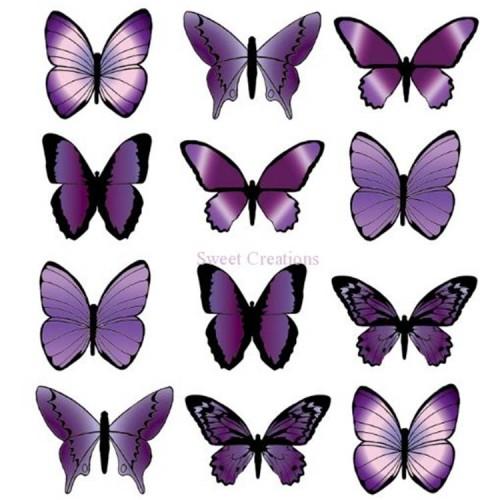 Purple wafer butterflies Butterflies