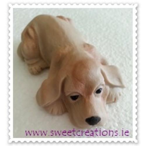 Golden Dog Animals/Farm