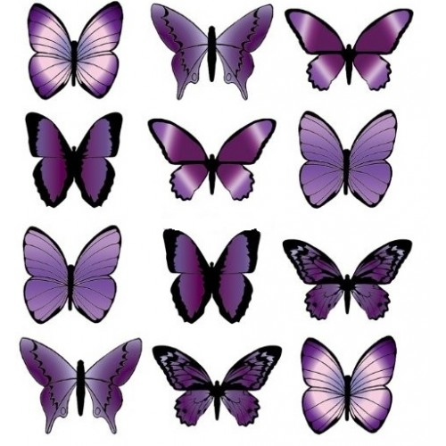 Purple wafer butterflies